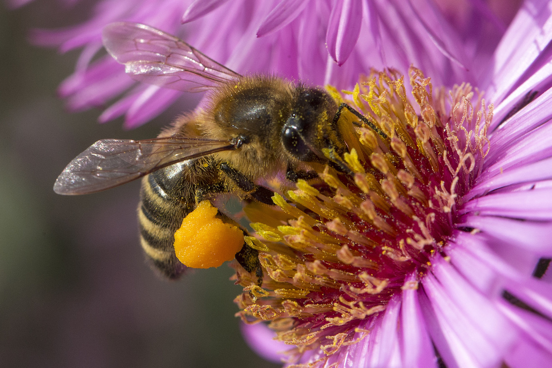 Bee Removal Tampa Bay | Swat Exterminating